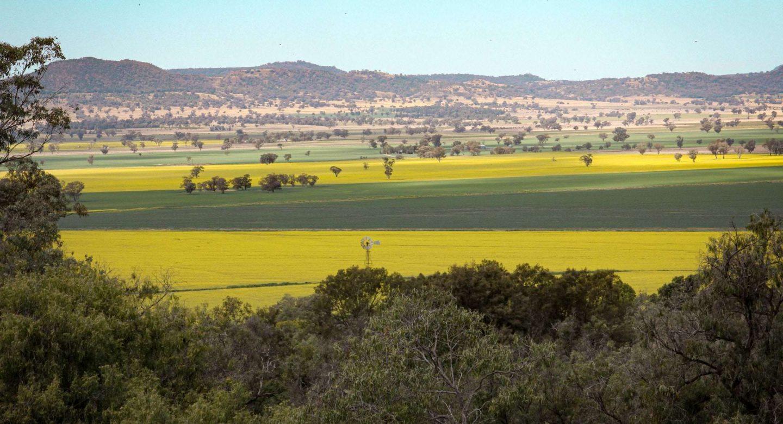 Goorianawa Station crops field